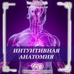 Интуитивная анатомия тета хилинг